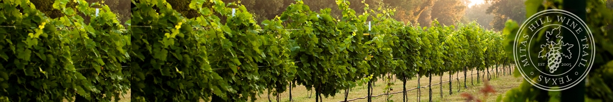 Picture of our vineyard.