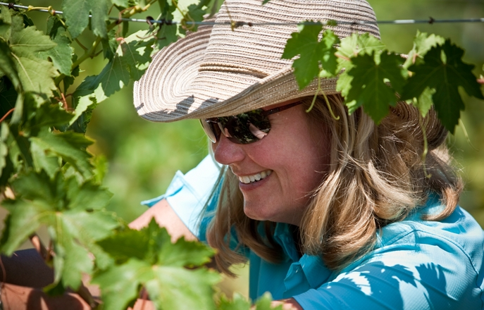Picture of a woman cutting grapes from the vine.